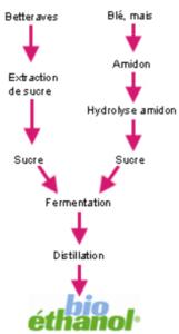 Production du bioethanol
